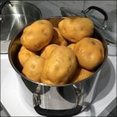 Potato Propping 1