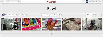 Fowl FixturesCloseUp Pinterest Board%0D