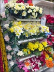 Floral Grid Shelves Overall