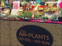 Air Plant Merchandising 2