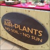 Air Plant Merchandising Aux