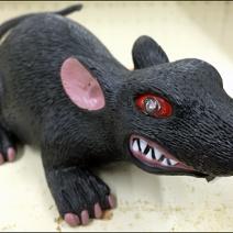 Halloween Rat 3