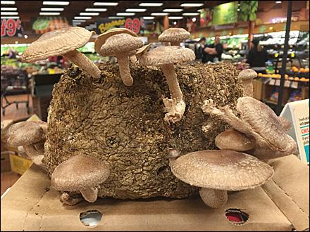In-Store Mushroom Farm Main