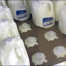 Nestring Milk Jugs 2