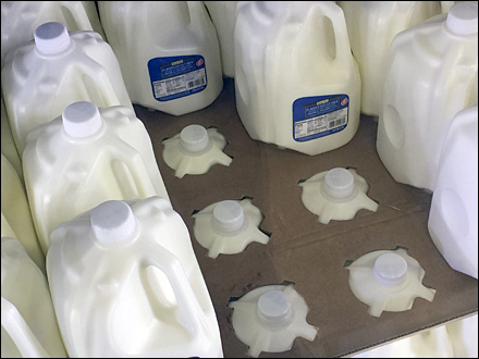 Nesting Milk Jugs Main
