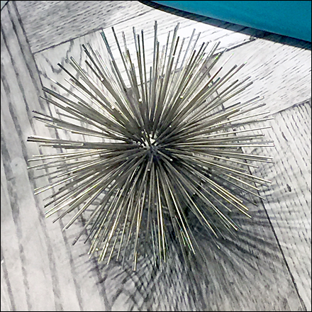 Spiney Purse Sea Urchin CloseUp