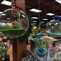 Free-Floating Plant Globes 2
