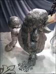 Poodle Spokesmodel Closeup