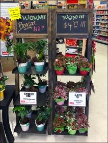Flower & Plant Chalkboard Easel 1