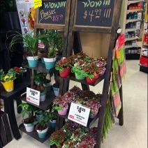 Flower & Plant Chalkboard Easel 2