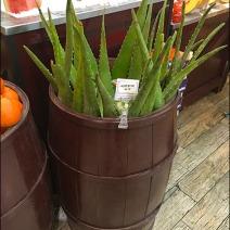 Gourmanoff Produce Aloe Bulk Barrel 2