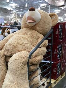 Jumbo Floppy Bear Bulk Bin 2