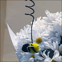 Kate Spade Bumble Bee Feature