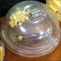 Kings New York Cheddar Tast Test Dome 3