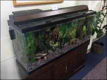 Aquarium Expert Fish Care Services 1