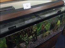 Aquarium Expert Fish Care Services 2