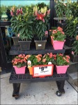 Dual Level Floral Dunnage Rack At Weis Aux