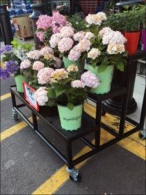 Weis Hydrangeas Floral Display Rack 1