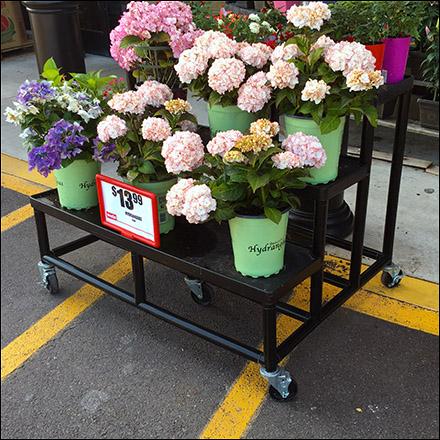 Weis Hydrangeas Floral Display Rack Main