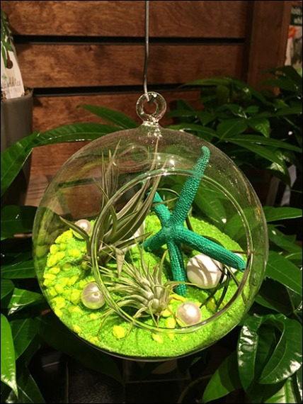 Air Plant Globe Fishing Line Presentation 3